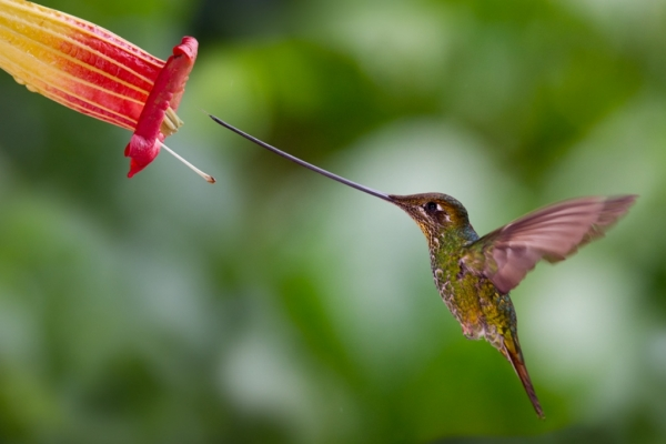 Самые маленькие птицы мира фото