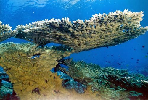 коралловые рифы фото