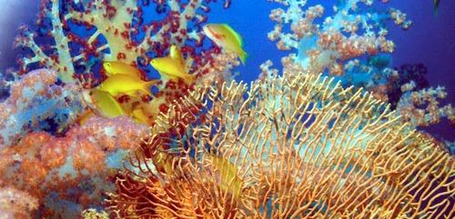 Коралловый риф состоит из кораллов всевозможных расцветок и форм.