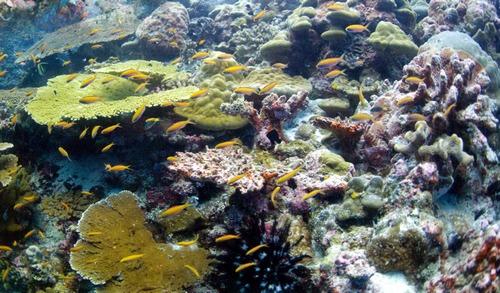 Передняя часть рифа, представляющая собой отвесную стену на острове Рождества (Австралия), - популярное место для дайвинга.