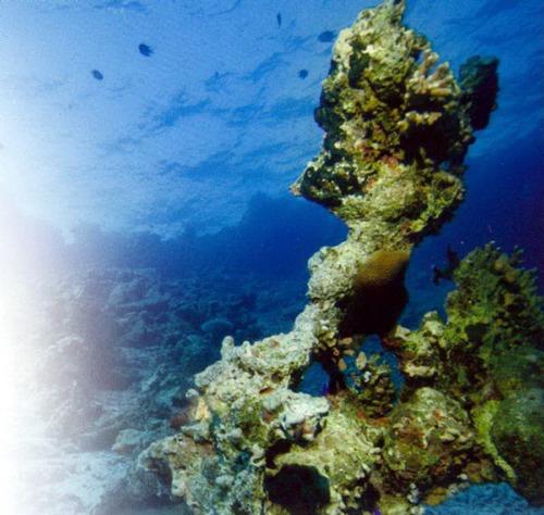Коралловые рифы - хрупкая экосистема. В этом месте мертвые кораллы разрушены волнами.