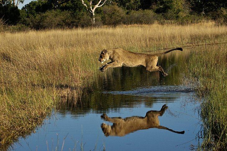 Дикая жизнь в Африке