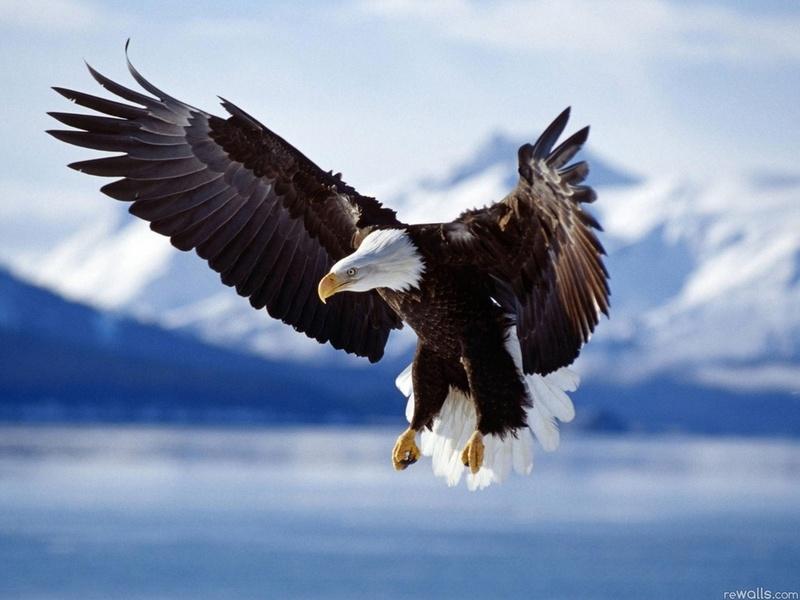 хищная птица орел