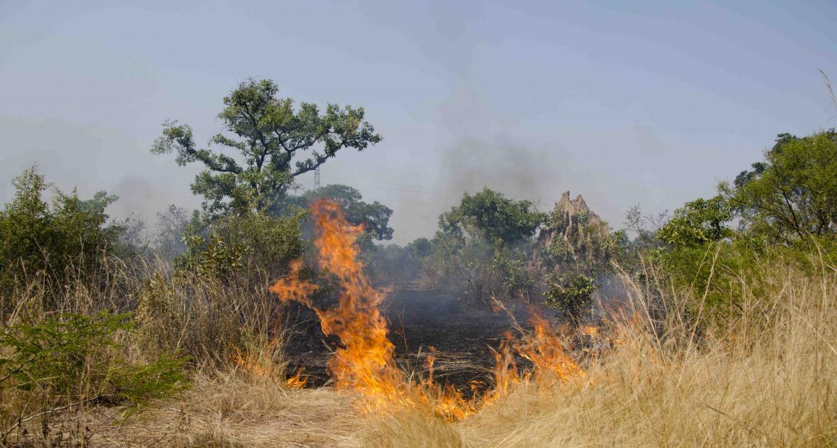 пожар в саванне