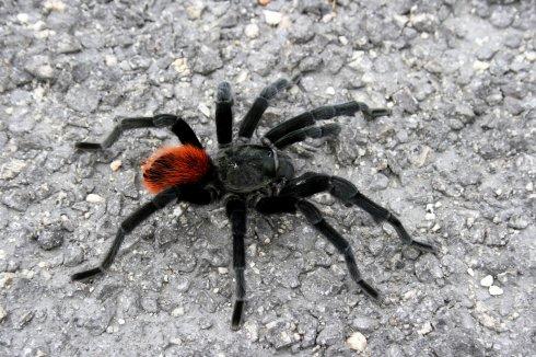 Характеристика мест обитания тарантула