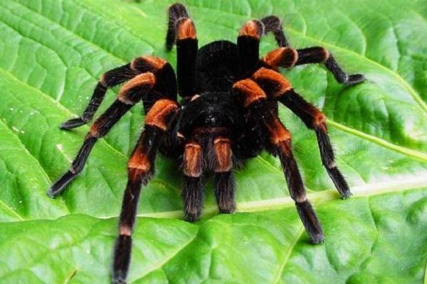 Приуроченность тарантула к солончаковым ландшафтам