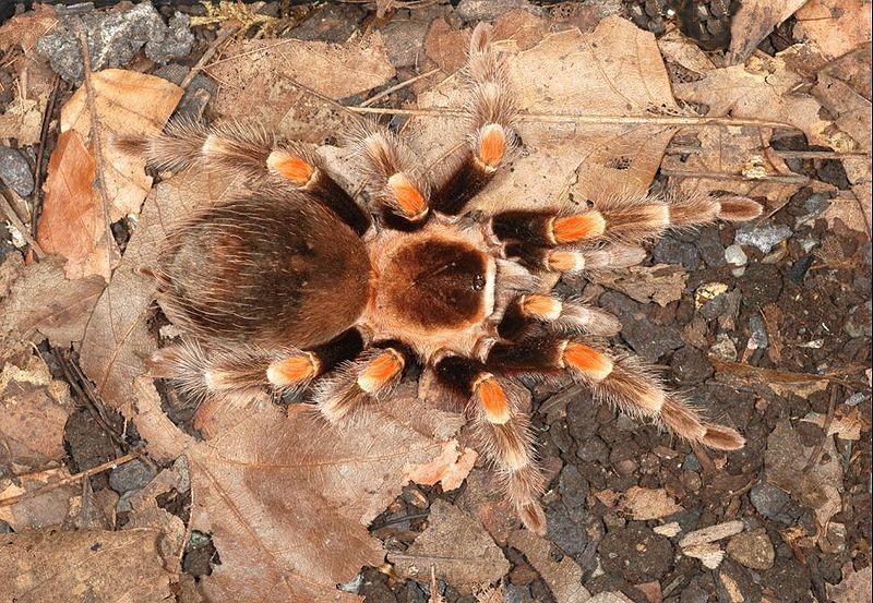 Самка с паучатами не опасна